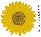 look on bloom of sunflower | Shutterstock . vector #26228155