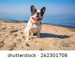 Portrait Of French Bulldog On...