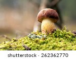 Bolete In Moss In Forest