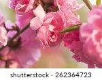 peach flowers | Shutterstock . vector #262364723