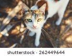 homeless cat portrait on the... | Shutterstock . vector #262449644