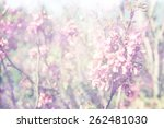 dreamy image of spring cherry... | Shutterstock . vector #262481030