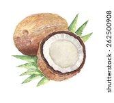 the coconut watercolor... | Shutterstock .eps vector #262500908