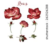 roses and leaves  watercolor ... | Shutterstock . vector #262526288