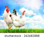 White chicken and white rooster standing on a green grass against sky. - stock photo