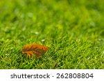 Autumn   Yellow Leaf On Green...
