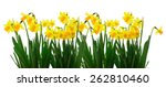 group of flowers yellow...   Shutterstock . vector #262810460
