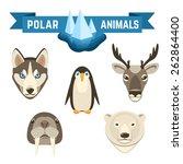 polar animals decorative icons... | Shutterstock .eps vector #262864400