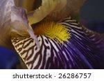 Close Up Of Stamens And Petals...