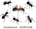 illustration with ants isolated ...