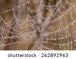 Spider Web With Pearl Shaped...