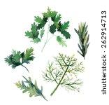 water color herbs. fennel ... | Shutterstock .eps vector #262914713