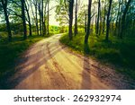beautiful green forest in... | Shutterstock . vector #262932974