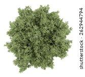 top view of crack willow tree...   Shutterstock . vector #262944794