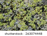 Densely Covered With Lichen...