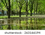 Beautiful Trees Reflected In A...
