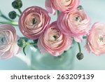 bouquet of pink ranunculus in... | Shutterstock . vector #263209139