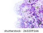 macro image of spring lilac... | Shutterstock . vector #263209166