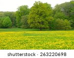 Dandelion Field With Trees In...