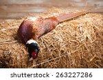 gun and pheasant   copy space   Shutterstock . vector #263227286