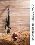 brace of pheasants   Shutterstock . vector #263227970