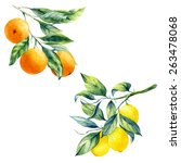 watercolor lemon and orange... | Shutterstock . vector #263478068