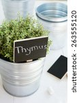 Kitchen Garden   Growing Thyme...