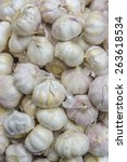 Small photo of Common Garlic, Allium ,Garlic, Allium sativum L.