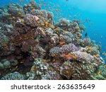 coral reef | Shutterstock . vector #263635649