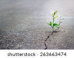 White Flower Growing On Crack...