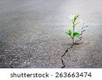 White Flower Growing On Crack...