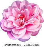 pink rose camellia flower... | Shutterstock .eps vector #263689508