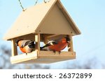 Two Bullfinches In Feed. Winter ...