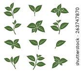 green tea leaf collection set.... | Shutterstock .eps vector #263747870