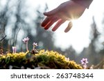 hand of a man above a mossy... | Shutterstock . vector #263748344