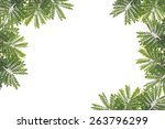 green leaf isolated on white... | Shutterstock . vector #263796299