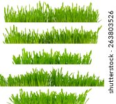 green grass isolated on white... | Shutterstock . vector #263803526