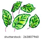 a set of very detailed... | Shutterstock . vector #263807960