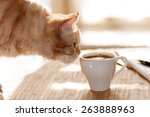 Red Cat Sniffing A Mug Of Blac...