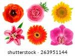 single flower heads. lily ... | Shutterstock . vector #263951144