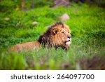 Male Lion Lying Down In Green...