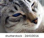 relaxing and enjoying cat | Shutterstock . vector #26410016