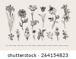 Stock vector botany set vintage flowers black and white illustration in the style of engravings 264154823