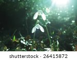first spring flowers | Shutterstock . vector #26415872