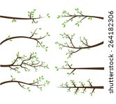 branch silhouettes elements   Shutterstock .eps vector #264182306