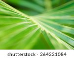 Abstract Tropical Nature ...