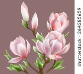 the image blooming magnolia Soulangis