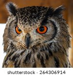 Owl With Powerful Red Orange...