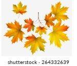 Autumn Leaf Maple And Maple...