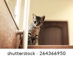 Stock photo kitten on staircase indoors 264366950